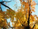 Fall Fall Scene wallpaper